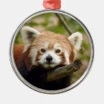 Ornamento del navidad de la panda roja adorno redondo plateado