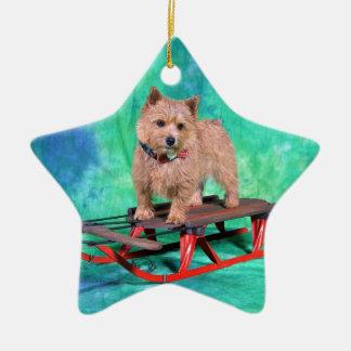 Ornamento del navidad de Norwich Terrier Adorno Navideño De Cerámica En Forma De Estrella