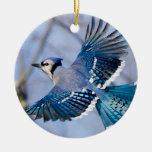 Ornamento del navidad del arrendajo azul adorno navideño redondo de cerámica