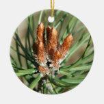 Ornamento del navidad del brote del pino ornamentos de navidad