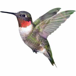 Ornamento del navidad del colibrí esculturas fotográficas
