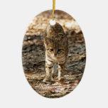 Ornamento del navidad del gato de Geoffroy Adornos De Navidad