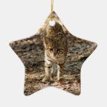 Ornamento del navidad del gato de Geoffroy Adorno De Navidad