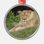 Ornamento del navidad del león de Barbary Ornatos