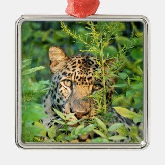 Ornamento del navidad del leopardo adorno de navidad