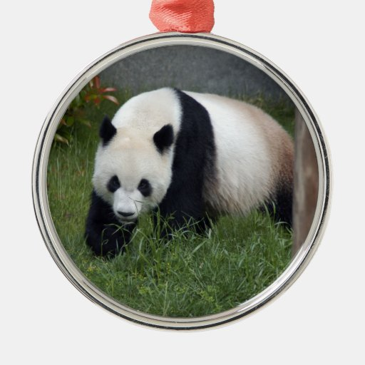 Ornamento del navidad del oso de panda adorno redondo plateado