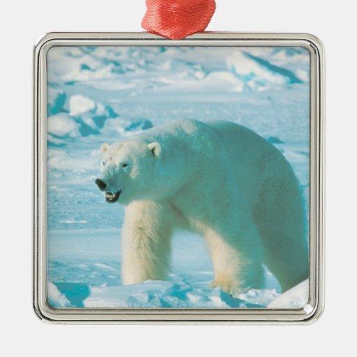 Ornamento del navidad del oso polar adorno navideño cuadrado de metal