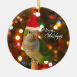 Ornamento del navidad del Parakeet del Quaker de S Ornamento Para Reyes Magos