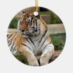 Ornamento del navidad del tigre de Bengala Ornamento Para Reyes Magos