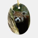 Ornamento del navidad - panda roja ornamento de navidad