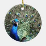Ornamento del pavo real adorno de reyes