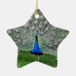 Ornamento del penacho del pavo real ornamente de reyes
