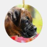 Ornamento del perrito del boxeador ornatos