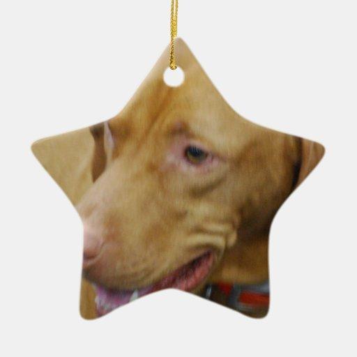 Ornamento del perro de Vizsla Adorno