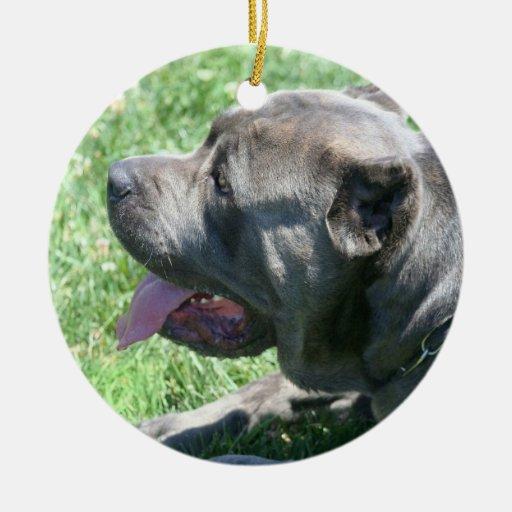 Ornamento del perro del corso del bastón ornamentos de reyes magos