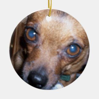 Ornamento del primer del perro (Smokey) Ornamente De Reyes