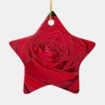 Ornamento del rosa rojo ornamentos de reyes