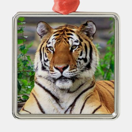 Ornamento del tigre siberiano adorno navideño cuadrado de metal