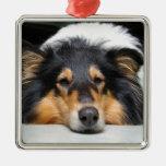 Ornamento hermoso del color de la nariz de perro d ornato