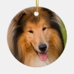 Ornamento hermoso del retrato del perro del collie ornatos