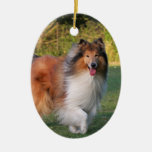 Ornamento hermoso del retrato del perro del collie adorno para reyes
