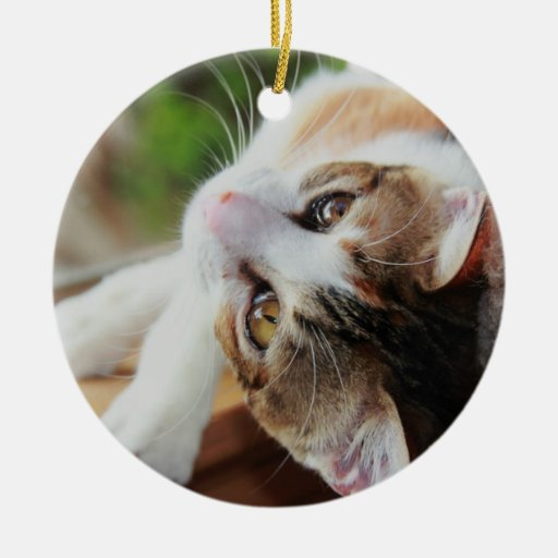 Ornamento lindo del navidad del gatito del calicó adorno de reyes