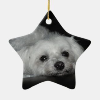 Ornamento maltés de amor adorable del perrito del  ornamentos de navidad