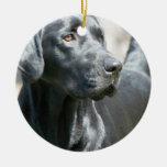 Ornamento negro alerta del perro del labrador retr adorno de navidad