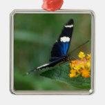 Ornamento negro y azul de la mariposa adorno