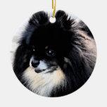 Ornamento negro y del moreno de Pomeranian Ornamento De Reyes Magos