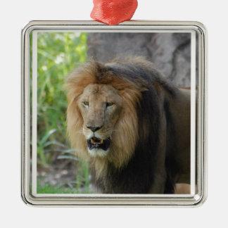 Ornamento orgulloso del león ornamento para arbol de navidad