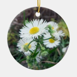 Ornamento redondo de la foto de Fleabane de la Adorno Redondo De Cerámica