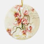 Ornamento rosado de la orquídea ornato