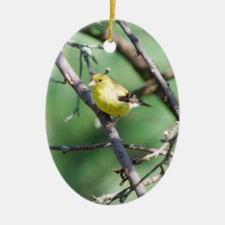 Ornamentos americanos del Goldfinch Adornos De Navidad