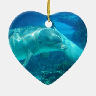Ornamentos juguetones de los delfínes ornatos