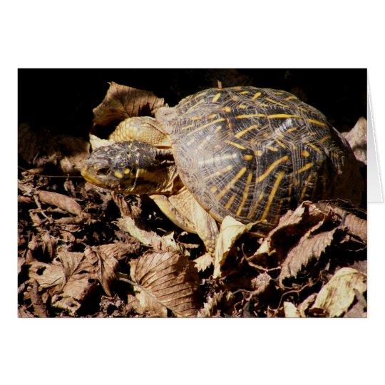Ornate Box Turtle Card