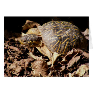 Ornate Box Turtle Greeting Cards