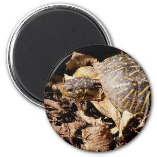 Ornate Box Turtle Magnet