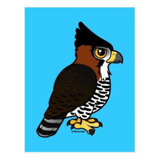 Ornate Hawk-Eagle Postcard
