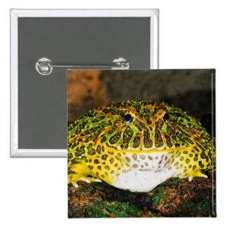 Ornate Horn Frog, Ceratophrys ornata, Native Pinback Button