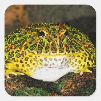 Ornate Horn Frog, Ceratophrys ornata, Native Square Sticker