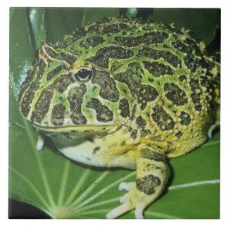 Ornate Horned Frog, (Ceratophrys ornata), Ceramic Tile