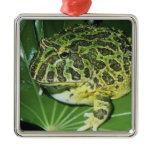 Ornate Horned Frog, (Ceratophrys ornata), Metal Ornament