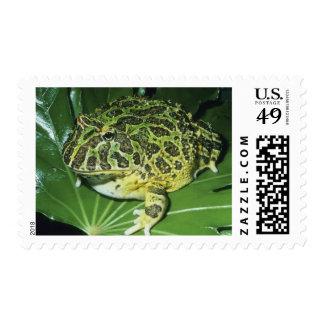 Ornate Horned Frog, (Ceratophrys ornata), Postage