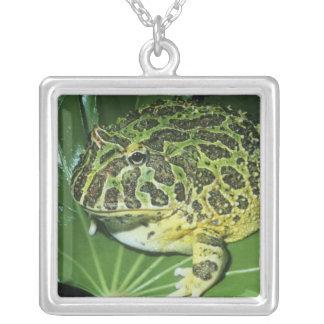 Ornate Horned Frog, (Ceratophrys ornata), Silver Plated Necklace