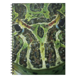 Ornate Horned Frog, (Ceratophrys ornata), South Notebook