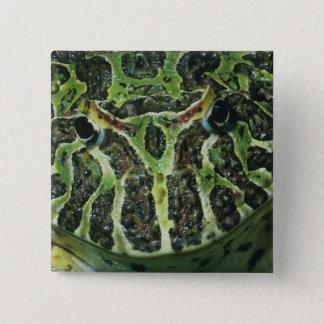 Ornate Horned Frog, (Ceratophrys ornata), South Pinback Button