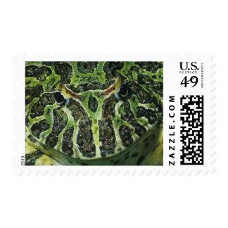 Ornate Horned Frog Ceratophrys ornata South Postage Stamp