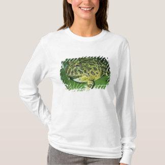 Ornate Horned Frog, (Ceratophrys ornata), T-Shirt