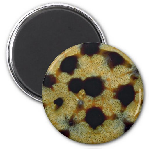 Ornate pattern of a Galapagos starfish 2 Inch Round Magnet